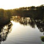 光る勇払川
